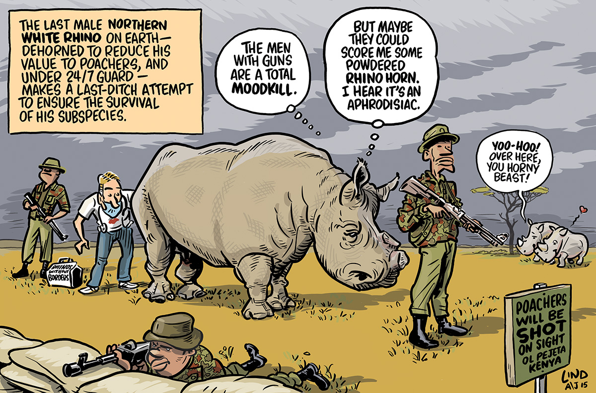 Cartoon_AJ41.4 – Rhino